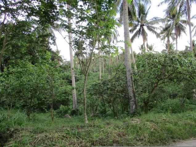 Farm lot in Barangay San Gregorio, Laurel, Batangas, vacant lot Batangas - 1