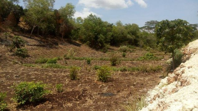 200 sqm Mountain View Residential Lot for Sale at 11,425/month - Tagbilaran - 6