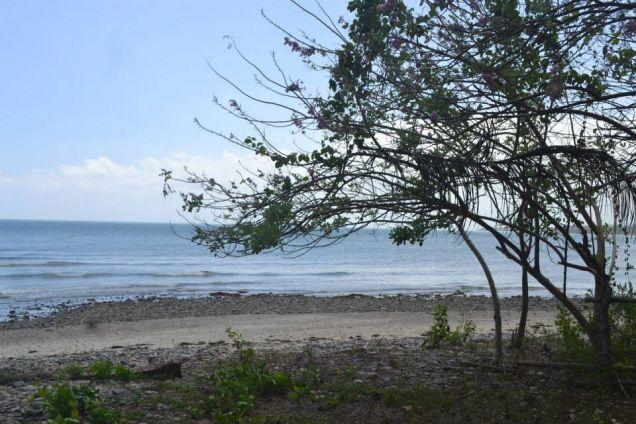 Beach Lot For Sale in Puerto Princesa, Palawan - 6