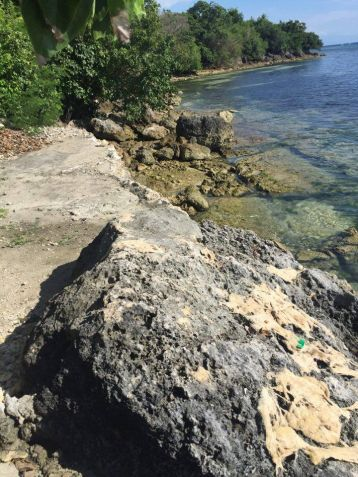 Stunning Beach Property in Badian Overlooking the Ocean and Negros Island - 5