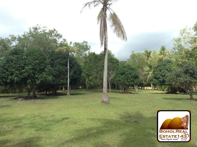 Affordable 1 hectare Danao, Panglao lot for Sale at 1,300 per sqm - 7