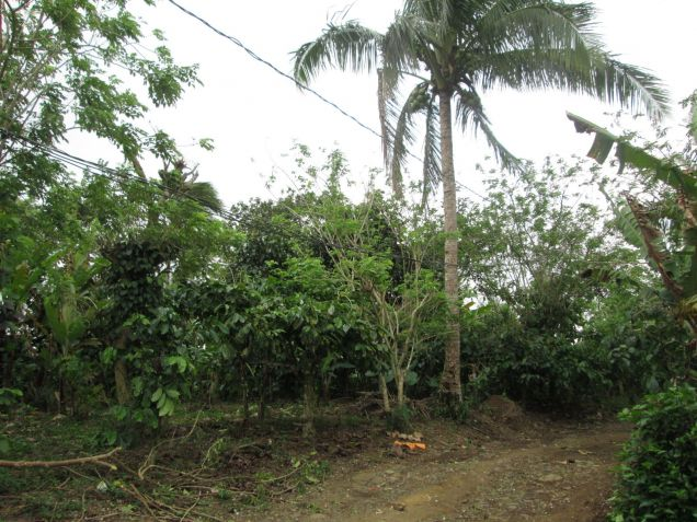 farm lot for sale near Tagaytay 554sqm at P1,600 per sqm - 6