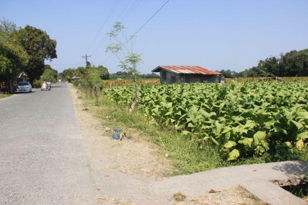 1,224 Sqm. Farm Lot for Sale, Balaoan, La Union, Ilocos - 2