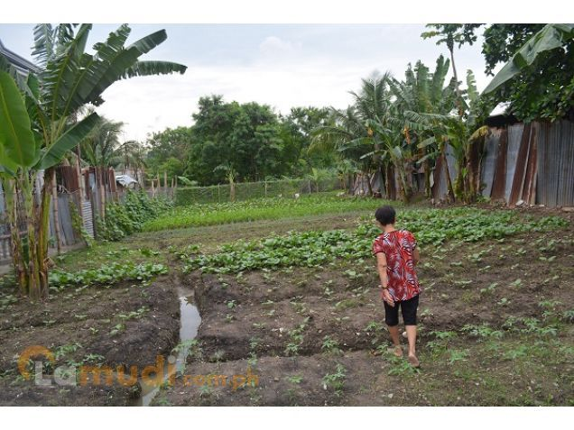 Mandue lot 830sqm   flat terrain P60,000 monthly - 1