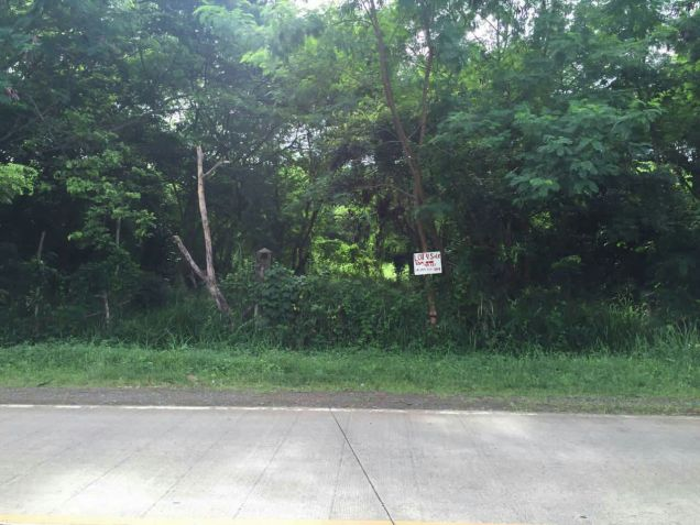 Industrial Lot for Sale, 48551sqm Lot in Puerto Princesa, Eckhart Ang - 4