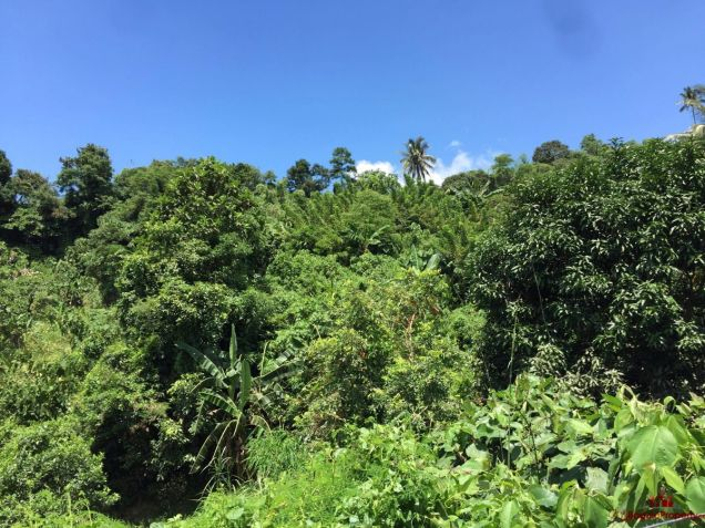 8,000 sqm Lot for Sale in Tuba, Benguet - 0