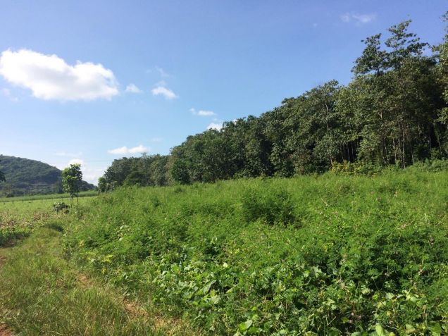 12hectares Bukidnon Manolo Fortich Alae Raw Land for Sale by Owner T126258 - 3