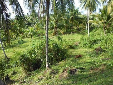 Agri-Business General Luna, Siargao, Surigao, Philippines - 3