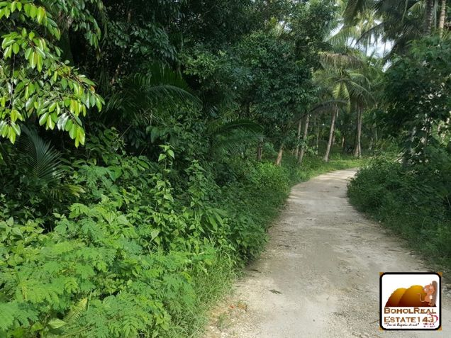 Affordable Corella Farmlot for sale at P280 per sqm - 5