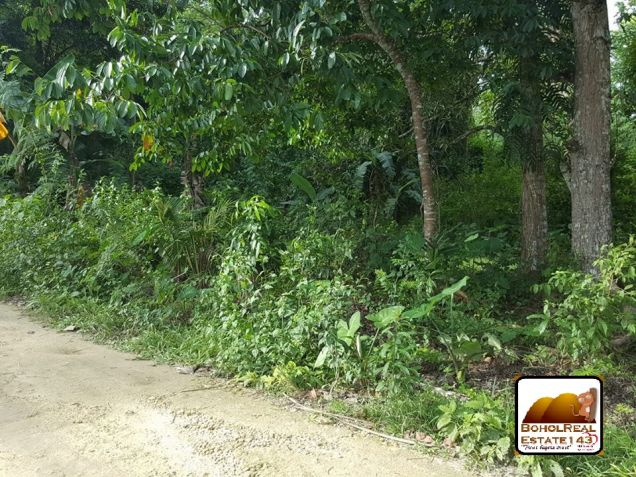 Affordable Corella Farmlot for sale at P280 per sqm - 3