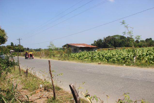 1,224 Sqm. Farm Lot for Sale, Balaoan, La Union, Ilocos - 4