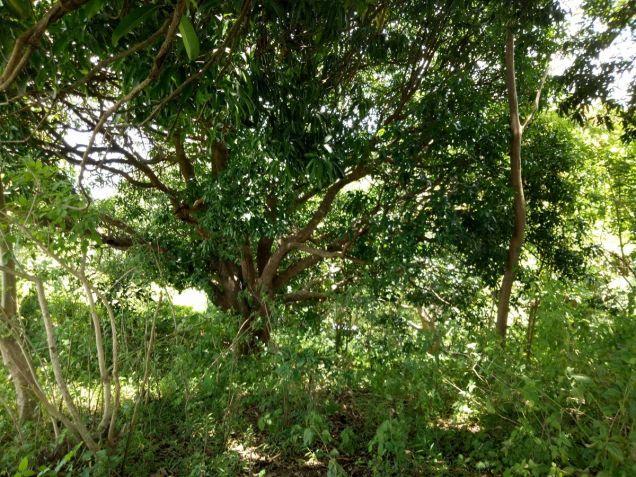 Overlooking Taal lot 3000 sqm in Laurel Batangas near Tagaytay - 4