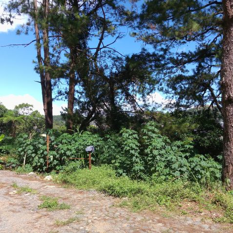 Residential Lots (3 adjacent lots) 993 Sq.m. Lot at Pico La Trinidad Benguet by Summer Capital Realty & Mktg. Services - 4