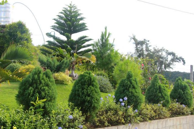 For Rent Resort House with Fabulous Gardens in Busay Cebu City - 5