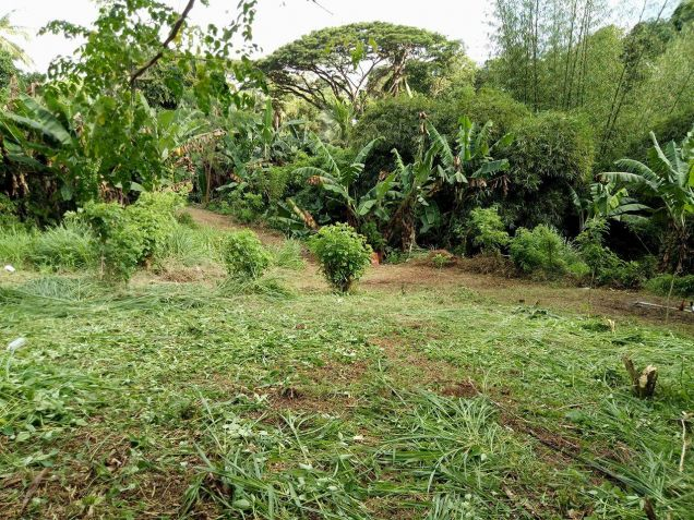 residential lot 100 sqm Near Adventist University of the Philippines - 2