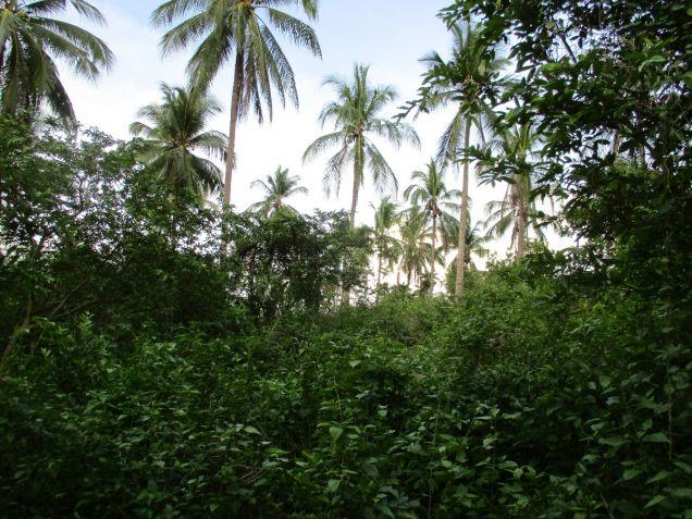 Farm lot in Barangay San Gregorio, Laurel, Batangas, vacant lot Batangas - 6
