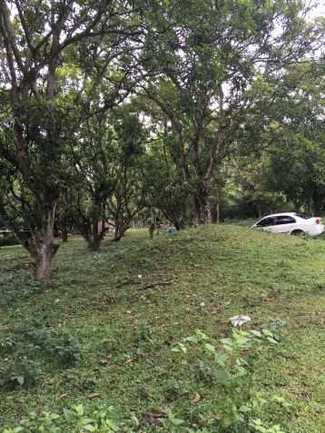 Farm Lot for Sale, 24416 sqm in Batangas City, Engr. Ednel Peter A. Madriaga - 5