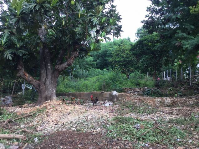 Vacant 567 sqm Residential Lot on Boracay - 0