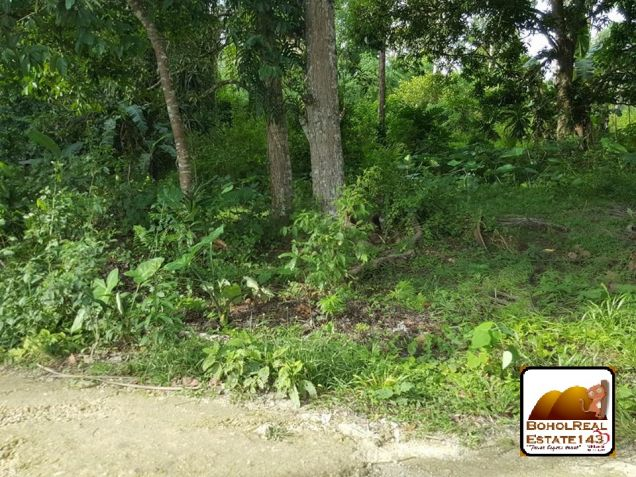Affordable Corella Farmlot for sale at P280 per sqm - 2