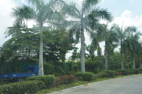Lot for Sale, 238sqm Lot in Mandaue, Lot 151, Phase 1-B, Vera Estate, Tawason, Castille Resources Realty Development Inc - 4