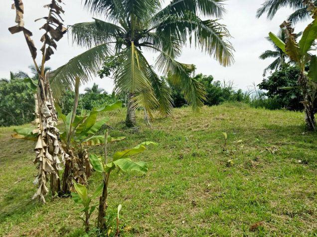 farm lot for sale near Tagaytay 1112sqm at P1,700 per sqm - 7