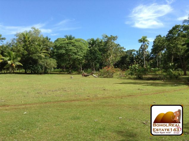 Affordable 1 hectare Danao, Panglao lot for Sale at 1,300 per sqm - 9