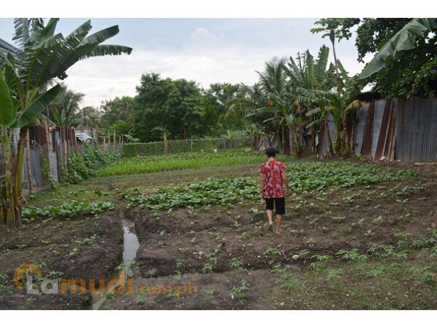Mandue lot 830sqm   flat terrain P60,000 monthly - 0