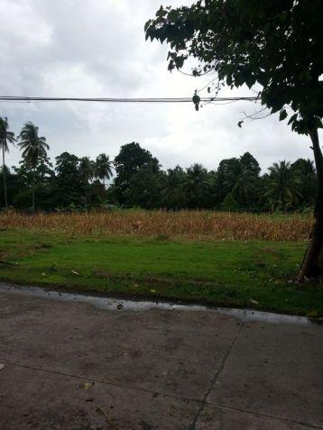 Farm Lot for Sale, 4188sqm Lot in Balingasag, Brgy. Cogon, Municipality of Balingasag, Cedric Pelaez Arce - 7
