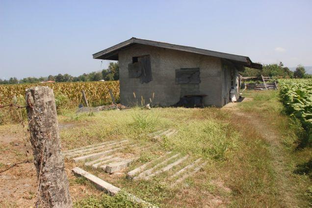 1,224 Sqm. Farm Lot for Sale, Balaoan, La Union, Ilocos - 5