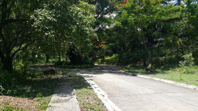 772 sqm Farm Lot for sale Havila Angono Rizal near Antipolo and Marikina City - 1