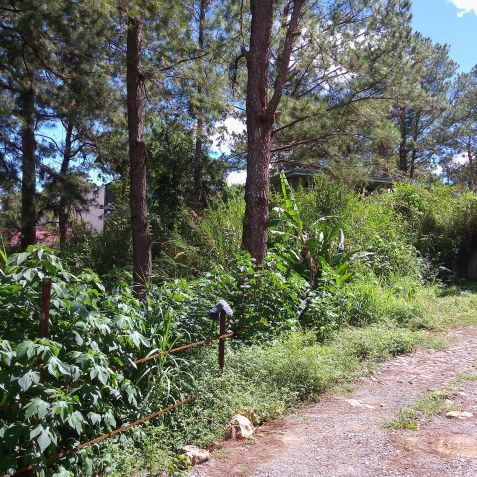 Residential Lots (3 adjacent lots) 993 Sq.m. Lot at Pico La Trinidad Benguet by Summer Capital Realty & Mktg. Services - 0