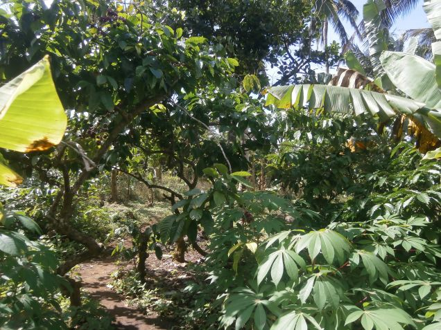 Residential Farm Lot for Sale, 3131sqm near Tagaytay, - 2