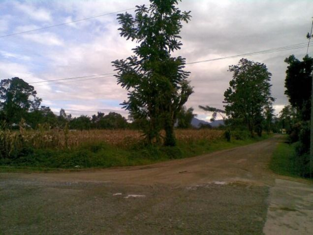 Lot for Rent, 4000sqm Lot in Manolo Fortich, Cedric Pelaez Arce - 3
