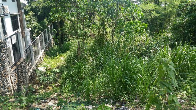 772 sqm Farm Lot for sale Havila Angono Rizal near Antipolo and Marikina City - 3