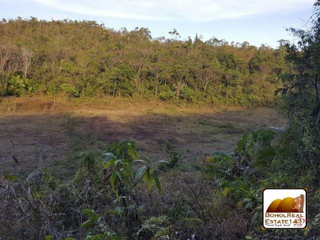 CHEAP Farmlot in Baclayon, Bohol - 3 hec at P150 per sqm - 7