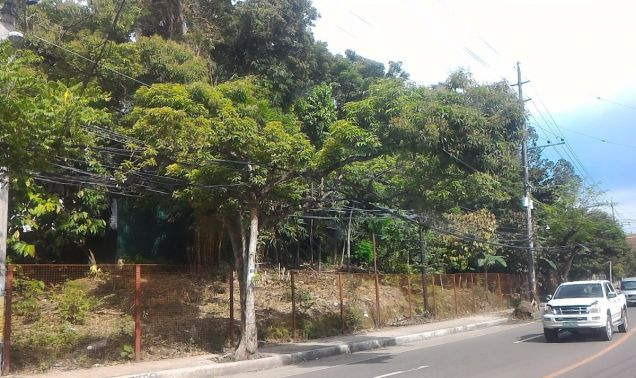 Lot for Lease in Talamban - 1
