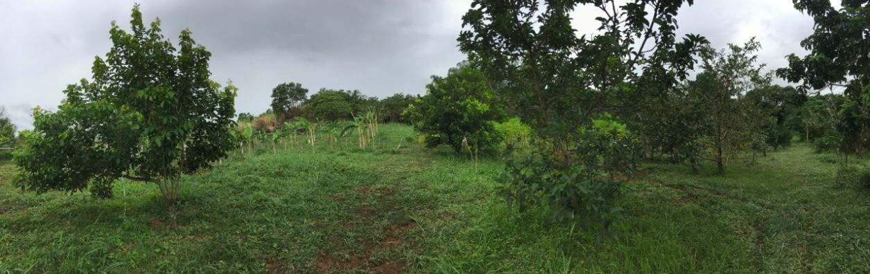 Tanay Rizal Agricultural Farm Land For Sale 600 Per Sqm